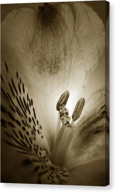Peruvian Canvas Print - Heart And Soul Of Alstroemeria  by Terence Davis