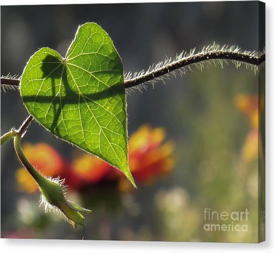 Heart Leaf 1 Canvas Print