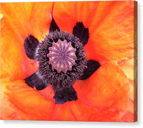 Canvas Print - Heart Of A Poppy by Orphelia Aristal