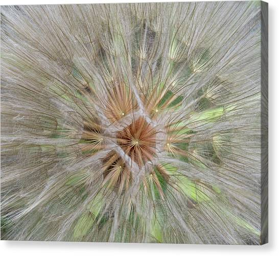 Heart Of The Dandelion Canvas Print