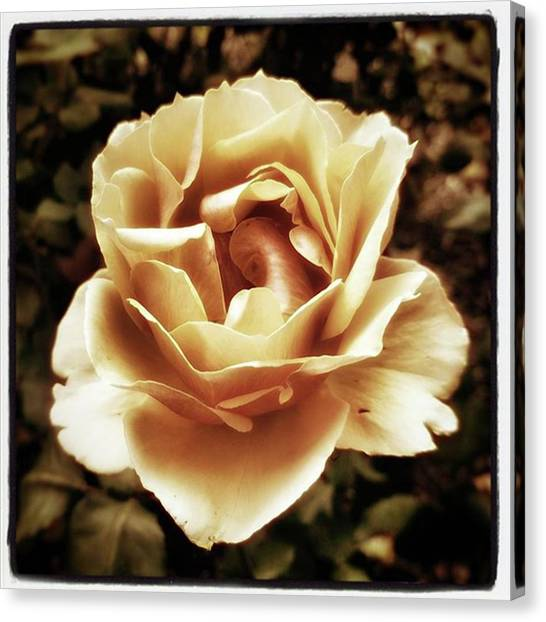 Canvas Print featuring the photograph Heart Rose. Imagine Your Heart Is A by Mr Photojimsf