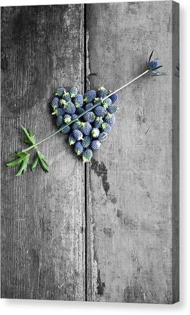 Heart Shaped Blue Thistle Buds With Arrow Stem Canvas Print