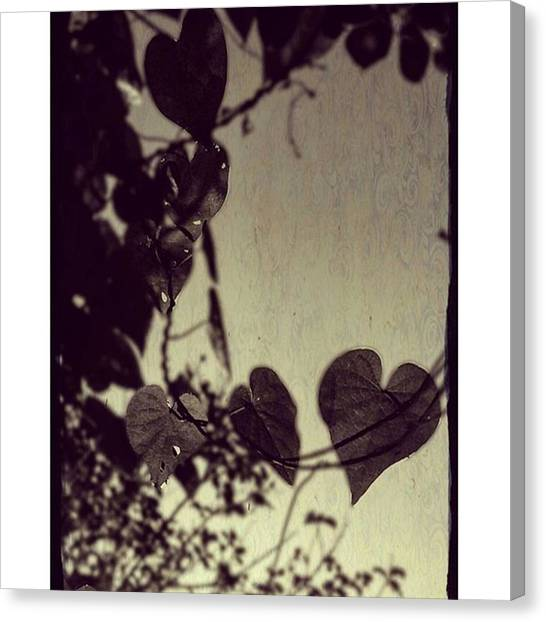 Shapes Canvas Print - Heart Shaped Leaves #trees by Peggy Hoefner