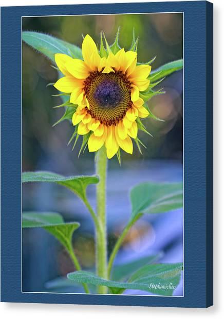 Heart Shaped Sunflower Canvas Print
