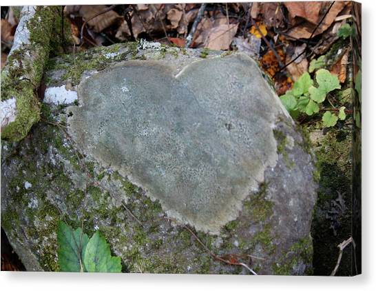 Heart Stone Canvas Print by Shannon Guest