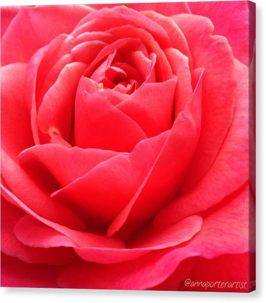 Red Roses Canvas Print - Hearts Desire Red Rose by Anna Porter