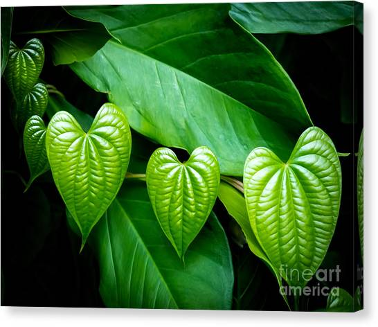 Hearts In Nature Canvas Print