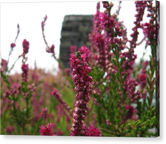 Heather Canvas Print by Greg Weflen