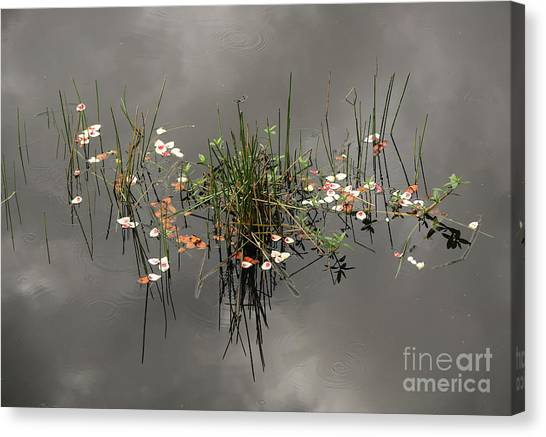 Heaven In The Swamp Canvas Print