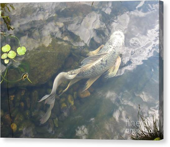 Heavenly Fish Canvas Print