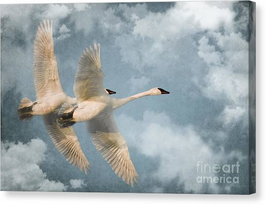 Heavenly Flight Canvas Print