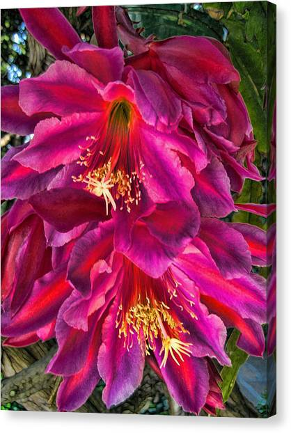 Heavenly Flower Canvas Print