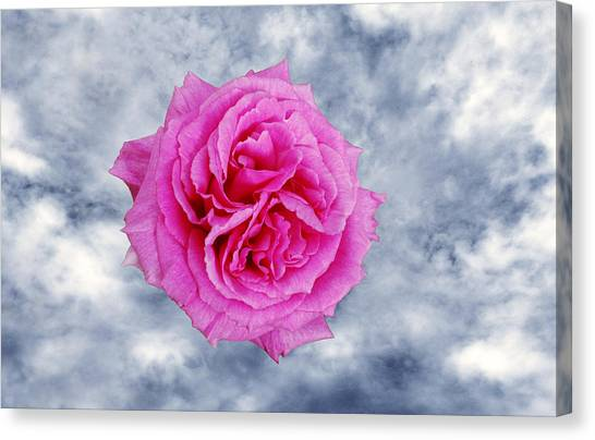 Heavenly Rose Canvas Print by Terence Davis