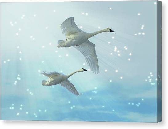 Heavenly Swan Flight Canvas Print