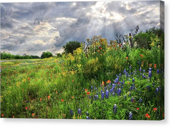 Austin Texas Canvas Print - Heaven's Light  by Lynn Bauer