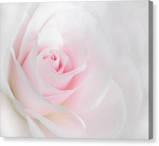 Heaven's Light Pink Rose Flower Canvas Print