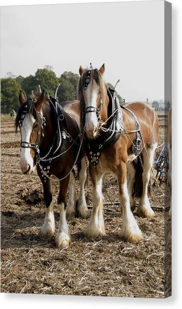 Heavy Horses Canvas Print by Gerry Walden