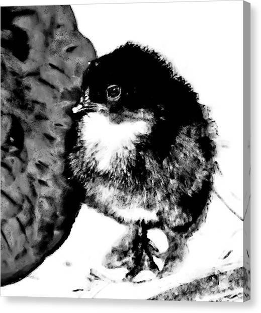 Hello Baby Chick Canvas Print