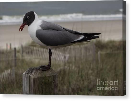 Hello Friend Seagull Canvas Print