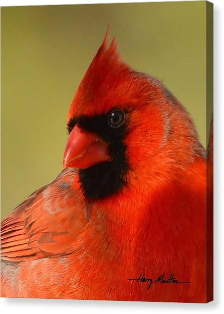 Hello Red Canvas Print