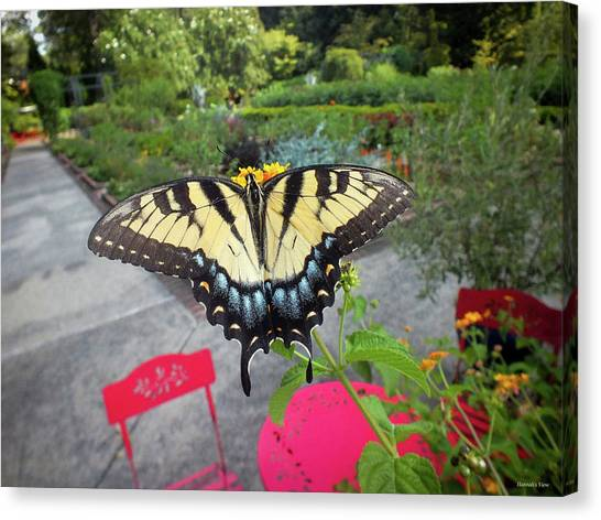 Hello Swallowtail  Canvas Print