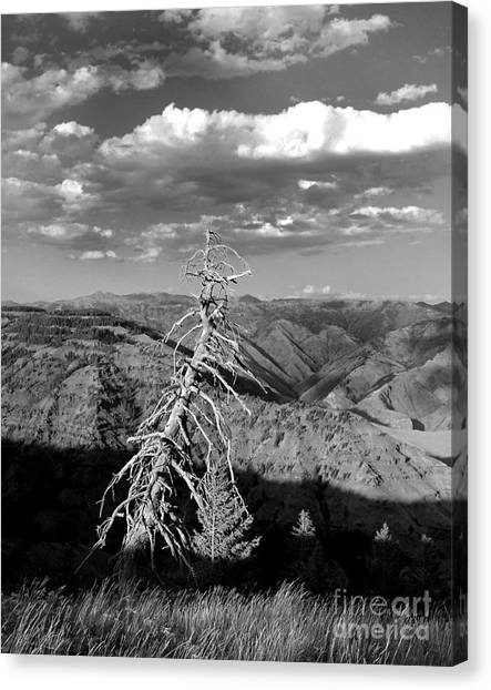 Hell's Canyon National Park Canvas Print by Diane E Berry