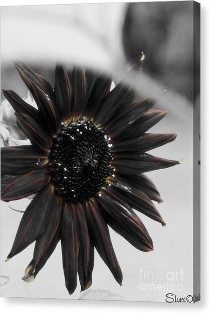 Hells Sunflower Canvas Print