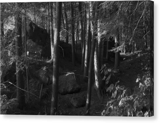 Hemlocks Canvas Print