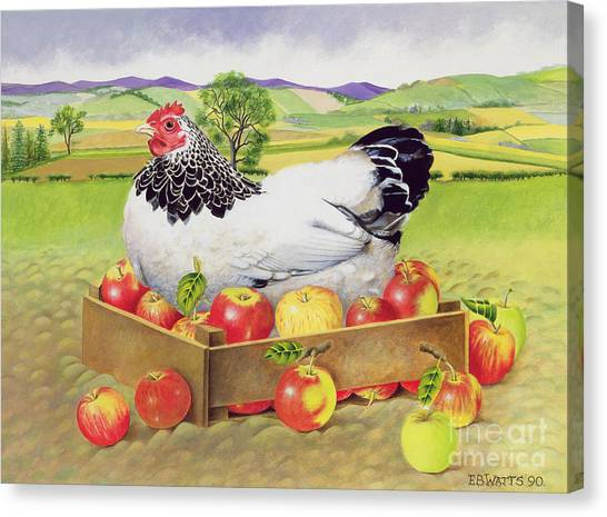 One Direction Canvas Print - Hen In A Box Of Apples by EB Watts