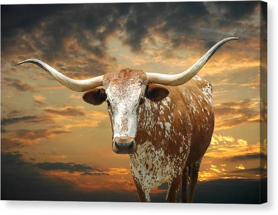 Sunsets Canvas Print - Henly Longhorn by Robert Anschutz