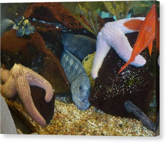 Ocean Life Canvas Print - Herbert The Eel by Tarasa Harlow