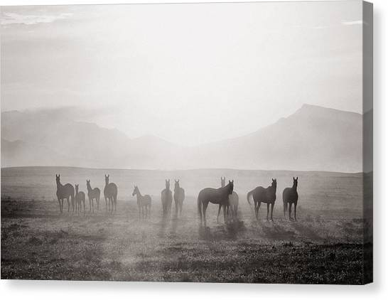 Horses Galloping Canvas Print - Herd #3 by Artur Baboev