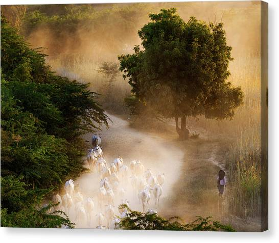 Canvas Print featuring the photograph herd and farmer going home in the evening, Bagan Myanmar by Pradeep Raja Prints