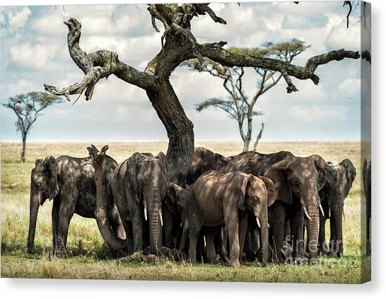 Herd Of Elephants Under A Tree In Serengeti Canvas Print