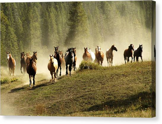 Herd Of Wild Horses Canvas Print