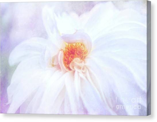 Here Comes The Bride - A Beautiful White Dahlia Canvas Print