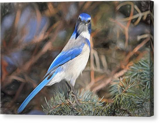 Bluejays Canvas Print - Here's Looking At You,  Kid by Donna Kennedy