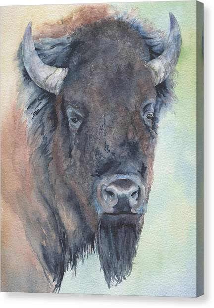 Here's Looking At You - Bison Canvas Print
