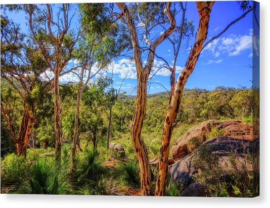 Heritage View, John Forest National Park Canvas Print