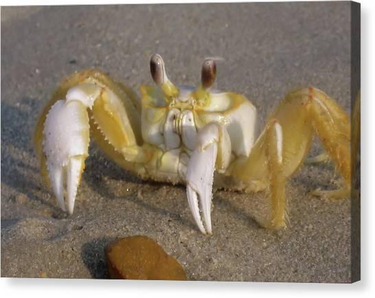 Hermit Crab Canvas Print by JAMART Photography