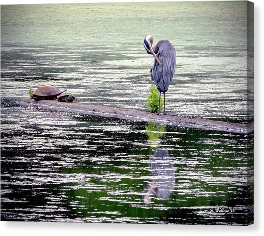 Coexist Canvas Print - Heron And Turtles by Brian Wallace