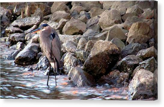 Heron At Sunset Canvas Print by Nicole I Hamilton