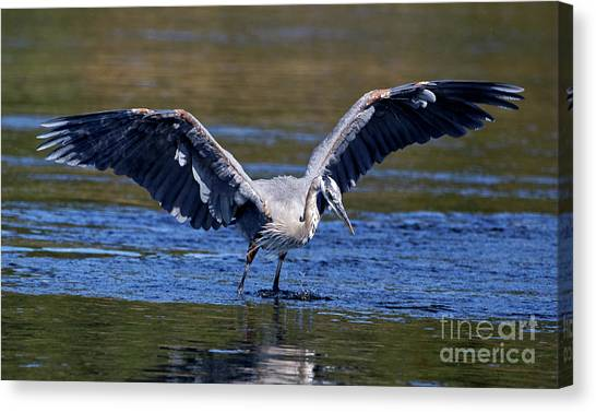 Heron Full Spread Canvas Print