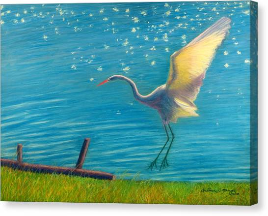 Heron Great White   Pastel   Canvas Print