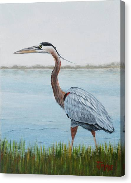 Heron In The Marsh Canvas Print