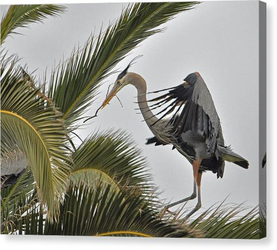Heron In The Palm Canvas Print