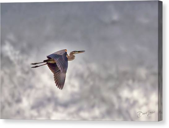 Canvas Print featuring the photograph Heron In The Storm by David A Lane