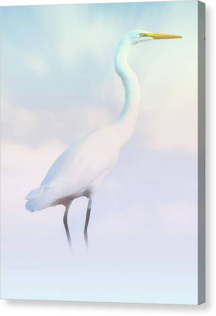 Heron Or Egret Stance Canvas Print