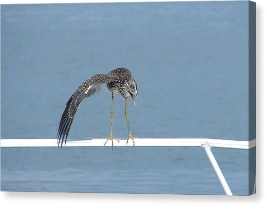 Heron Stretching Canvas Print