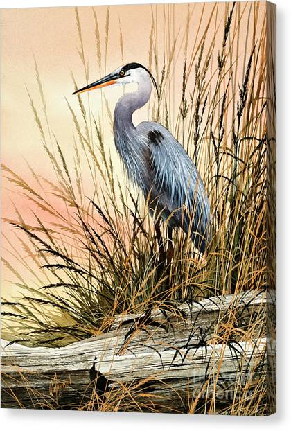Herons Canvas Print - Heron Sunset by James Williamson